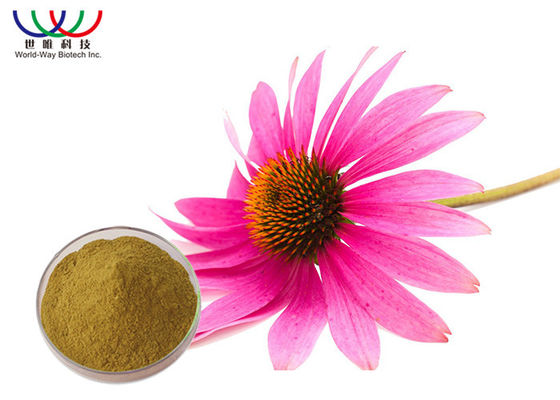 China Aerial Part Echinacea Purpurea Extract Light Brown Fine Powder Enhancing Immunity supplier
