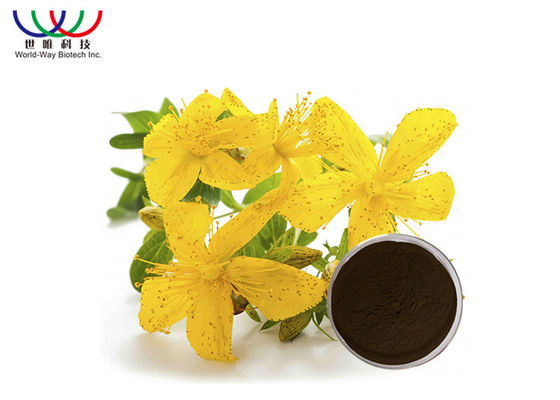China Saint John'S Wort Extract For Nerve Pain  , Solvent Extraction St John'S Wort Standardized Extract supplier