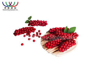 China Medical  Schisandra Chinensis Extract Anti - Aging For Boosting Liver Function supplier