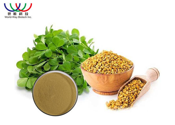 China Pure Fenugreek Extract Powder 20 % 4 - Hydroxy Isoleucine Pharmaceutical Grade supplier