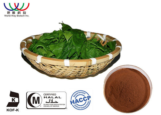 China Natural Pure Morus Alba Extract Mulberroside Anti - Bacteria For Skin Cosemtic supplier