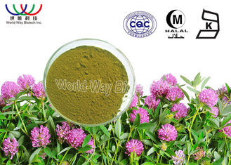 China Trifolium Pratense Isoflavone Red Clover Powder , Formononetin Red Clover Blossom Extract supplier