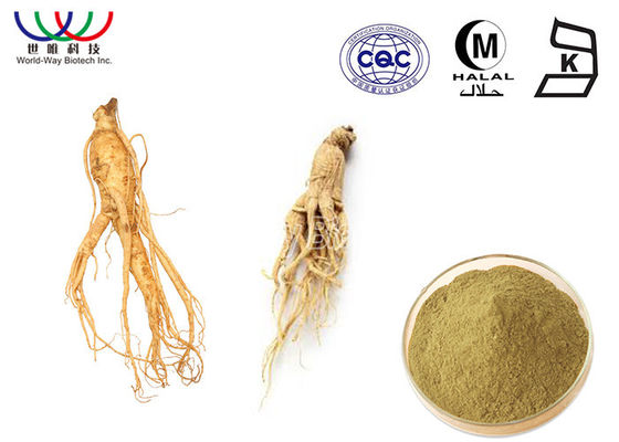 China Health Care Korean Red Ginseng Powder , Asian Female Ginseng Liquid Extract supplier