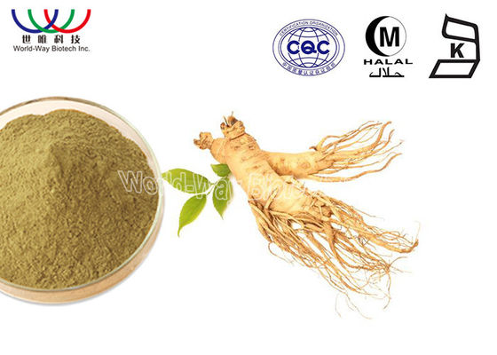 China Herb Ginseng Root Extract 10% Ginsenoside Powder Oxygen Resistance For Cosmetics Field supplier
