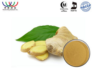 China Pharmaceutical Raw Ginger Root Extract Powder Relieve Nausea And Vomiting supplier