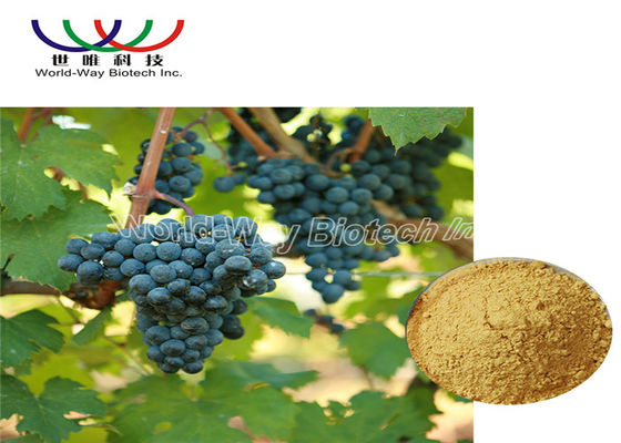 China 5% Viniferin Red Grape Skin Extract , Grape Vine Extract Anti Inflammation supplier