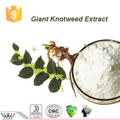 China Japanese Knotweed Resveratrol Extraction , Organic Polygonum Cuspidatum Root Extract supplier