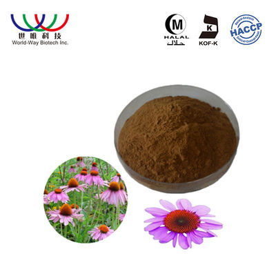 China Echinacea Purpurea Pure Plant Extract 2% - 4% Chicoric Acid Blance Blood Sugar supplier