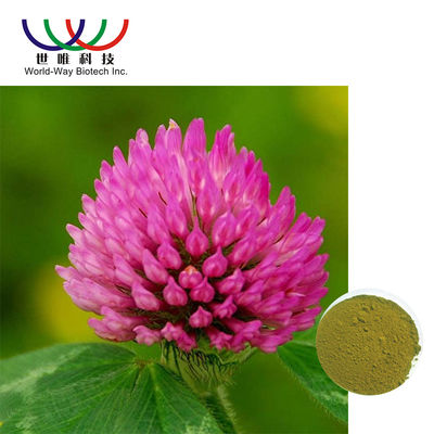 China Trifolium Pratense L Red Clover Extract Green Powder Relieve Menopausal Symtoms supplier