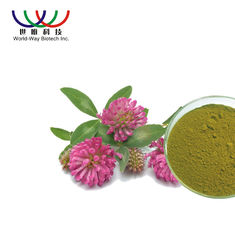 China Water Soluble Red Clover Extract Pharmaceutical Grade Treatment For Indigestion supplier