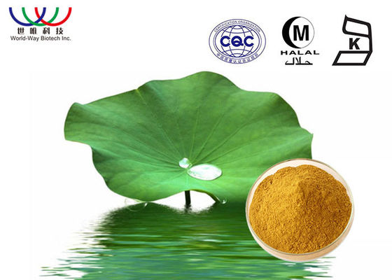 Brown Fine Powder Lotus Leaf Extract Nuciferine And Flavonoids For Weight Loss
