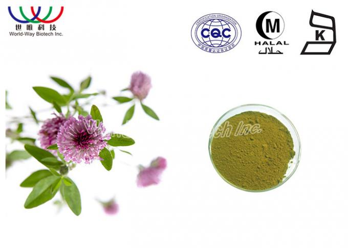 Natural Isoflavones Red Clover Extract Trifolium Pratense Powder For Women Supplement