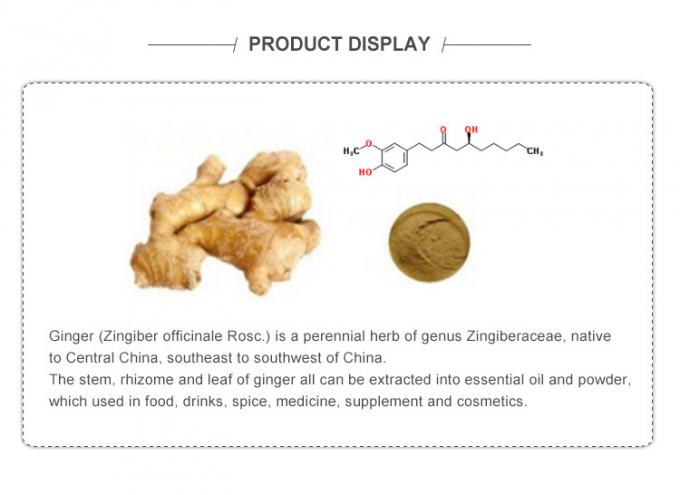 Pharmaceutical Raw Ginger Root Extract Powder Relieve Nausea And Vomiting