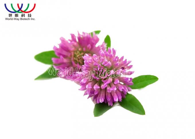 Trifolium Pratense L Red Clover Extract Green Powder Relieve Menopausal Symtoms